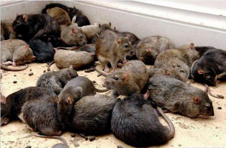 онлайн лениндград элеватор крысы кошки семье Джейсона
