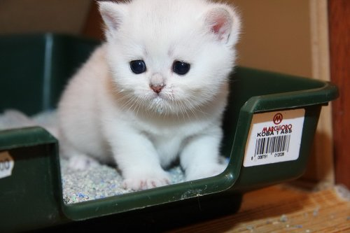 Как приучить котенка к туалету: воспитываем питомца с любовью