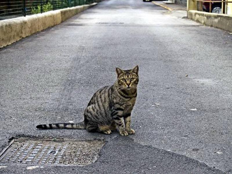 Пропадают домашние коты