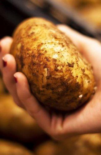 Запас картофеля по доступным ценам может появиться в регионе