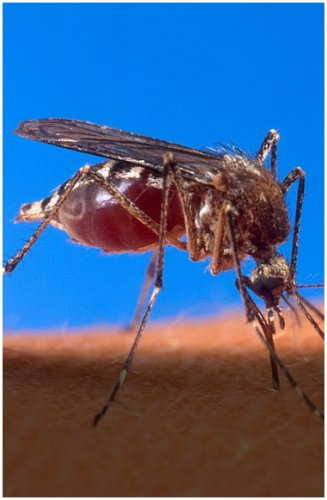 Комарам вход запрещен!