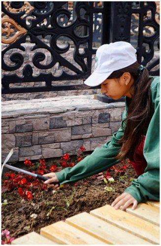 «Жасыл ел» за месяц высадят 100 тысяч цветов в Павлодаре