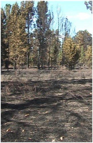 Грозовые разряды становятся причиной пожаров в лесах региона