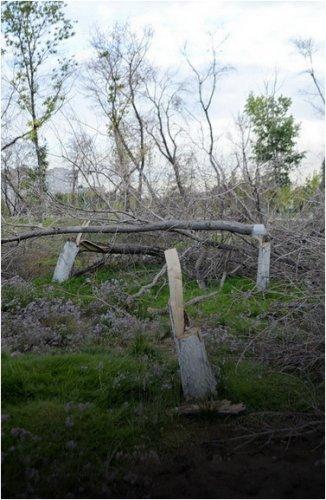 Деревья на территории парка Металлургов загублены