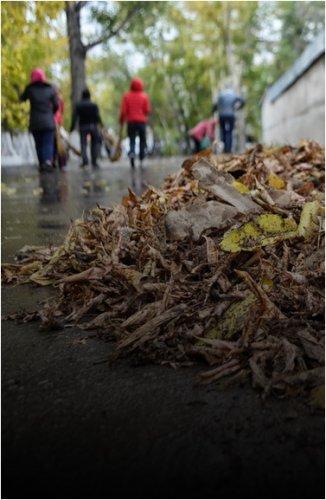 Более двух тысяч деревьев планируют высадить в рамках месячника