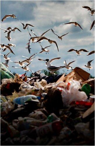 Захоронение пластмассы, макулатуры и стекла запретят