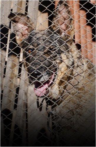 Участились случаи бешенства от диких и домашних животных