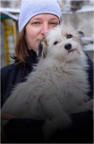 Бездомные животные ищут своих новых хозяев