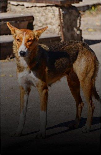 В Павлодаре в этом году повторят опыт проекта по стерилизации бездомных кошек и собак