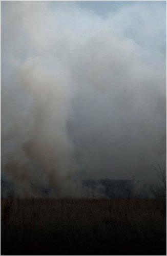 За последние выходные в Павлодарской области зарегистрировано 88 пожаров, сгорело 67 гектаров леса