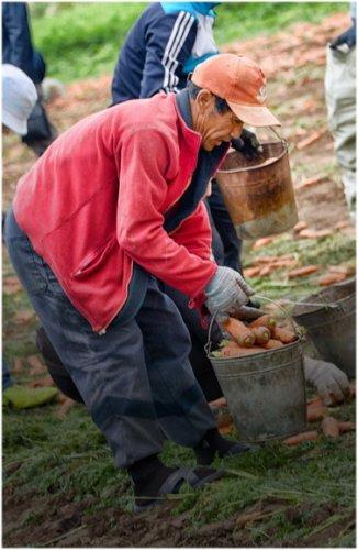 В Павлодарской области заканчивается уборка урожая