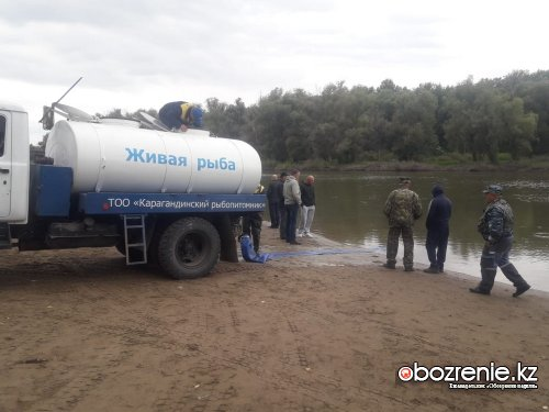 17,5 тысячи сеголеток карпа выпустили в Иртыш