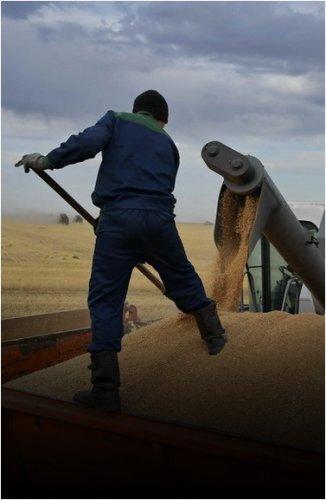 В Павлодарской области завершили уборку зерновых