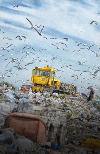 Отходы вывозят на павлодарскую свалку незаконно