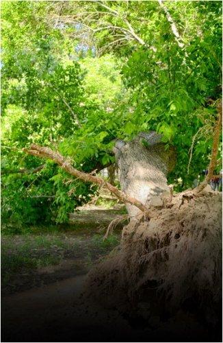 В Баянаульском районе дерево насмерть задавило подростка