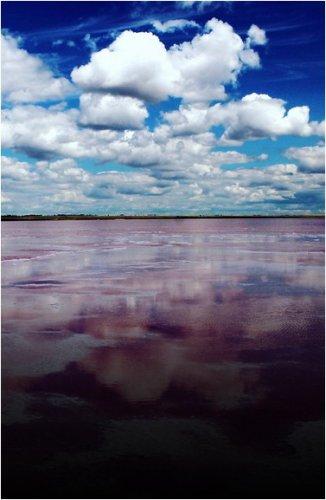 В этом году многие павлодарцы впервые для себя открыли розовое озеро в 15 км от Павлодара