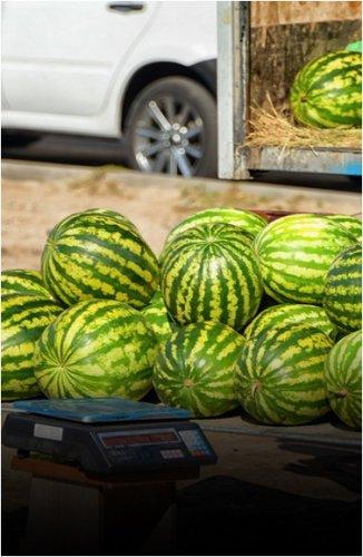 Какие товары выросли в цене, а какие подешевели, сообщили в госорганах Павлодарской области