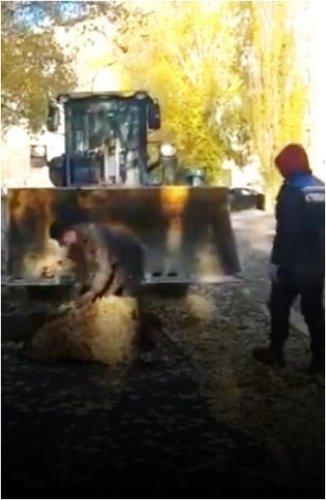 В Павлодаре подрядчик уложил асфальт на опавшие листья