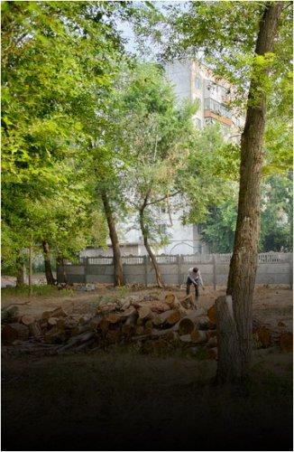 В Казахстане ужесточат наказание за незаконную вырубку деревьев