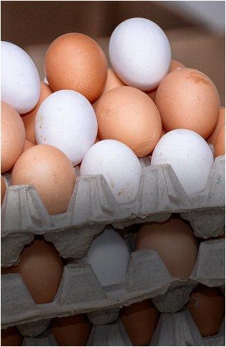 Чиновники сообщили адреса магазинов, где можно купить яйца по социальной цене