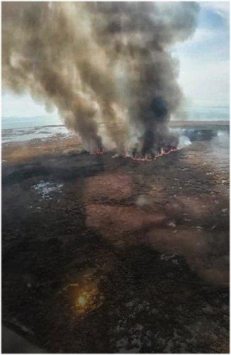Степь и сосновый бор горят на 300 гектарах в Павлодарской области