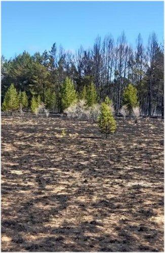 Более двух дней пытались потушить пожар в лесном резервате Павлодарской области