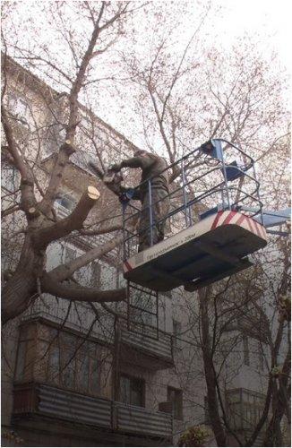 Куда обращаться для санитарной обрезки деревьев, сообщили коммунальщики
