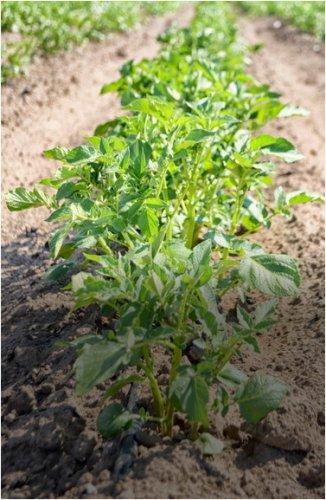 Орошаемые земли планируют увеличить в Павлодарской области