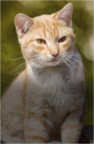 """""""Кошачья чумка абсолютно не несет никакой опасности для человека"""""""