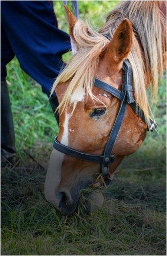 Более 4000 голов скота поместили на штрафстоянки в Павлодарской области